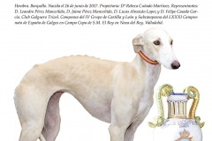 Revista Galgos  abril 2019